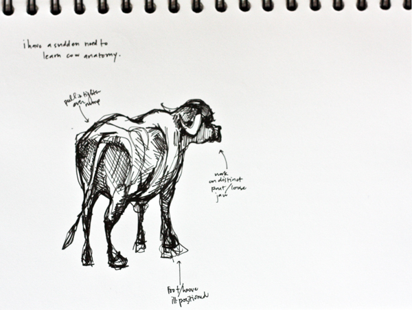 India cow sketch